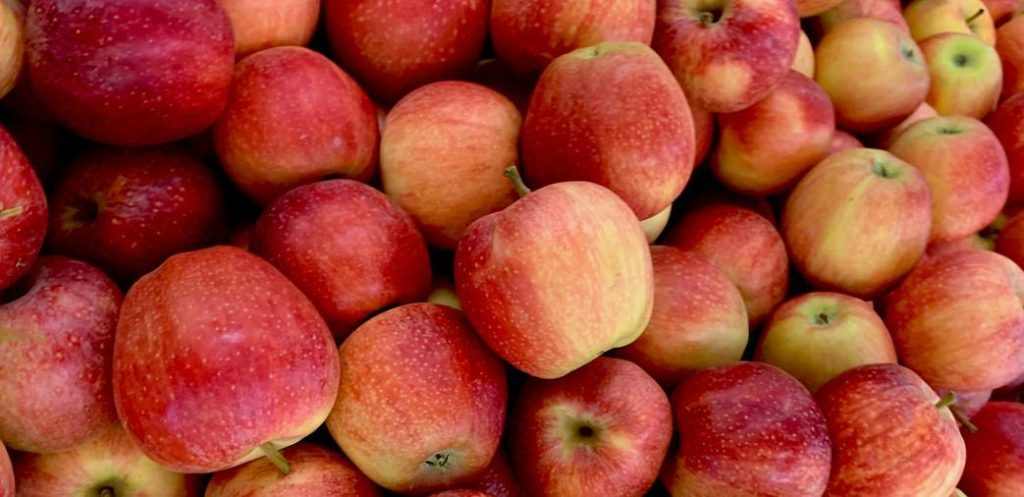 firmafrugt æbler